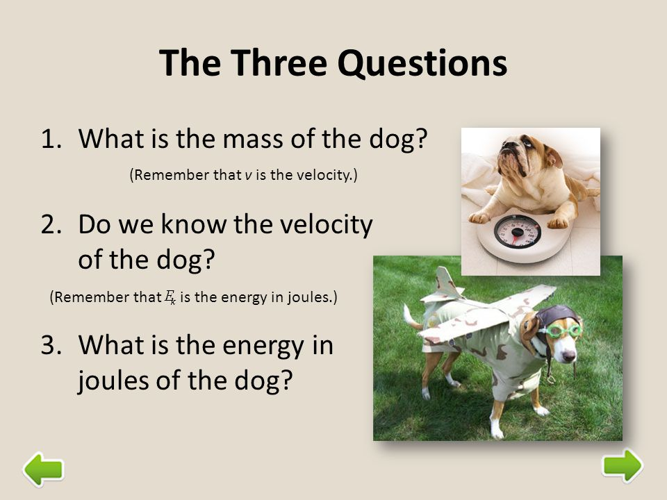 The Three Questions What is the mass of the dog