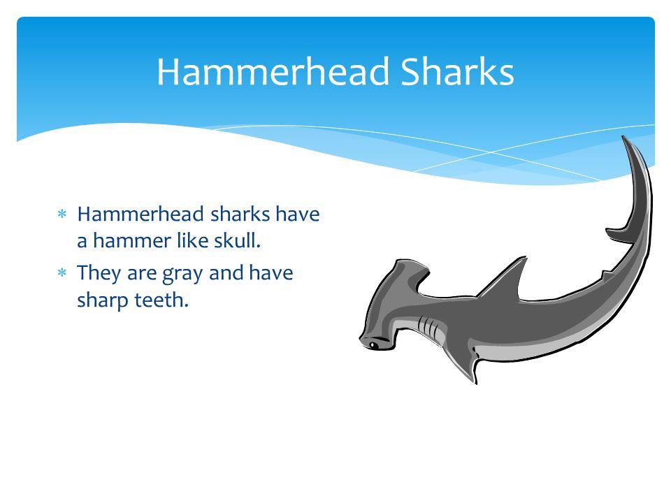 Hammerhead Sharks Hammerhead sharks have a hammer like skull.