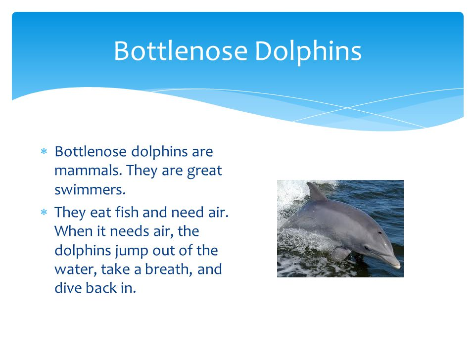 Bottlenose Dolphins Bottlenose dolphins are mammals. They are great swimmers.