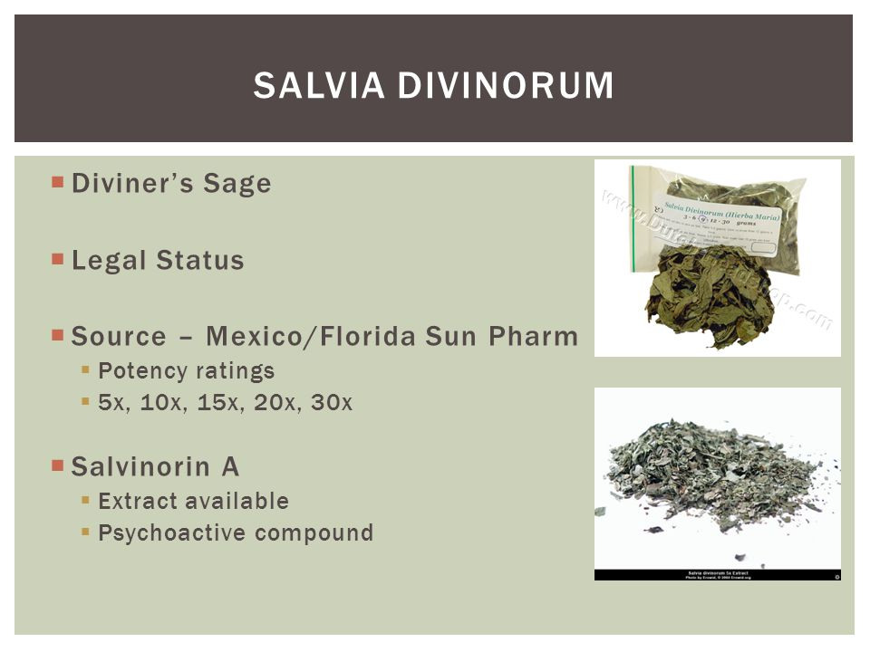 Salvia divinorum Diviner's Sage Legal Status