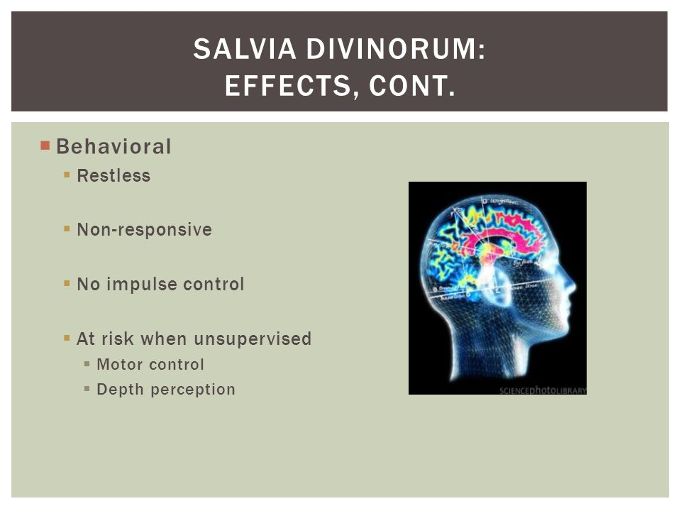 Salvia divinorum: effects, cont.