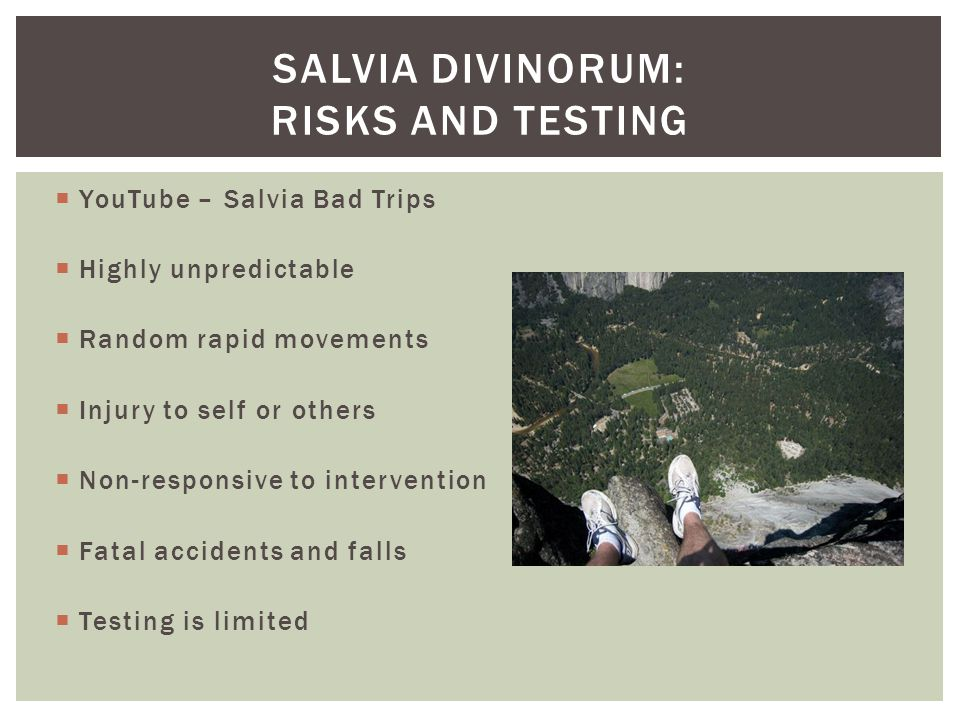 Salvia divinorum: Risks and testing