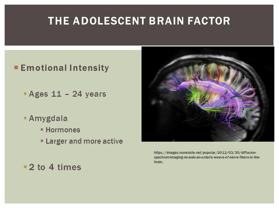 The Adolescent Brain Factor