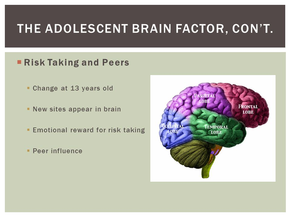 The Adolescent Brain Factor, con't.