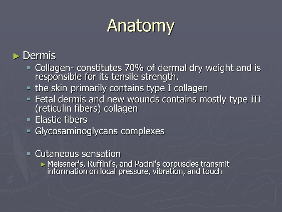 Anatomy Dermis. Collagen- constitutes 70% of dermal dry weight and is responsible for its tensile strength.