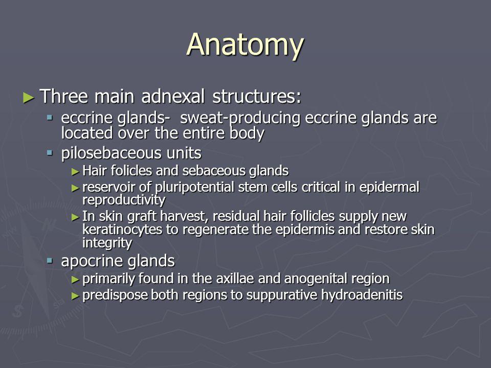 Anatomy Three main adnexal structures: