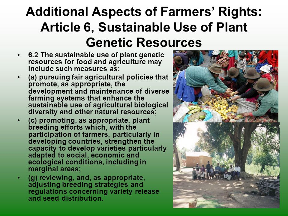 Additional Aspects of Farmers' Rights: Article 6, Sustainable Use of Plant Genetic Resources