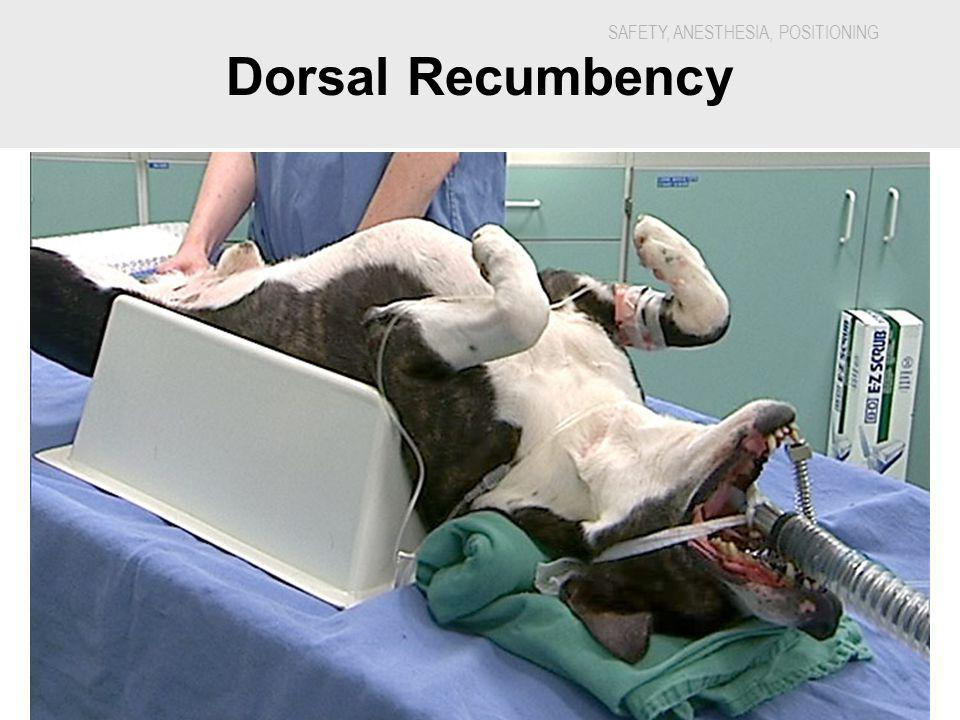 Dorsal Recumbency 5888H - Veterinary Dental Nursing