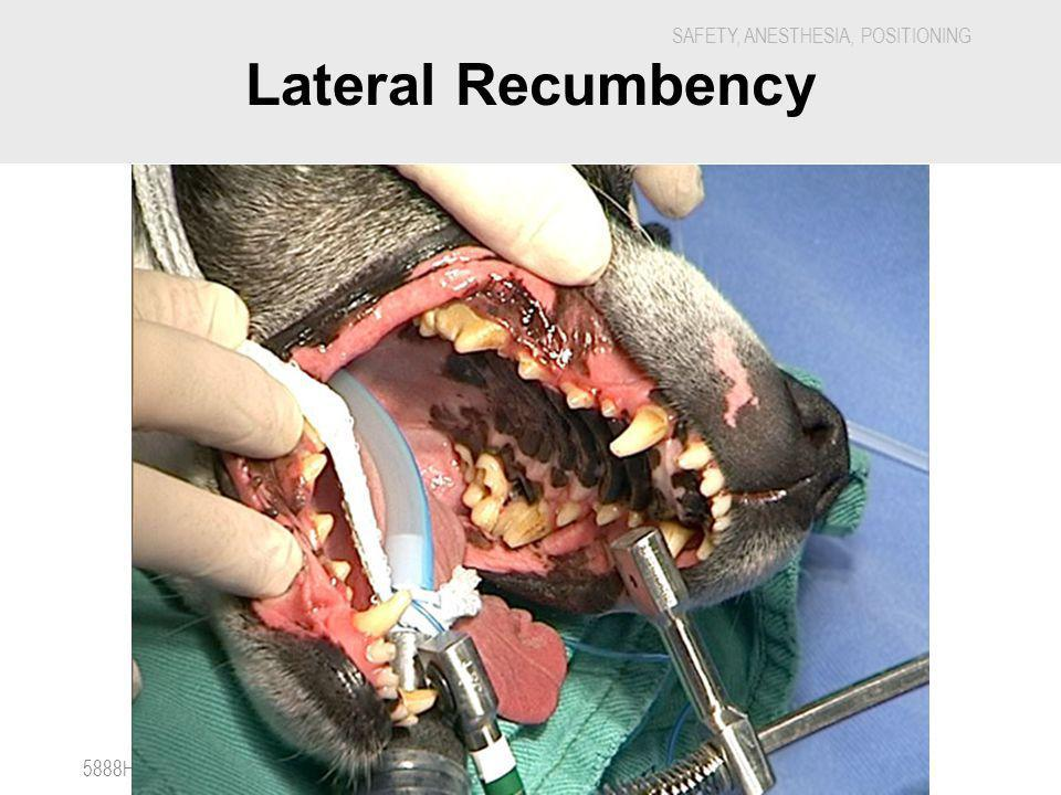 Lateral Recumbency 5888H - Veterinary Dental Nursing
