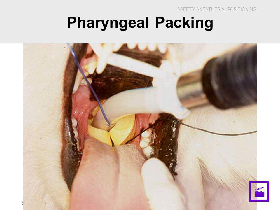 Pharyngeal Packing · 5888H - Veterinary Dental Nursing