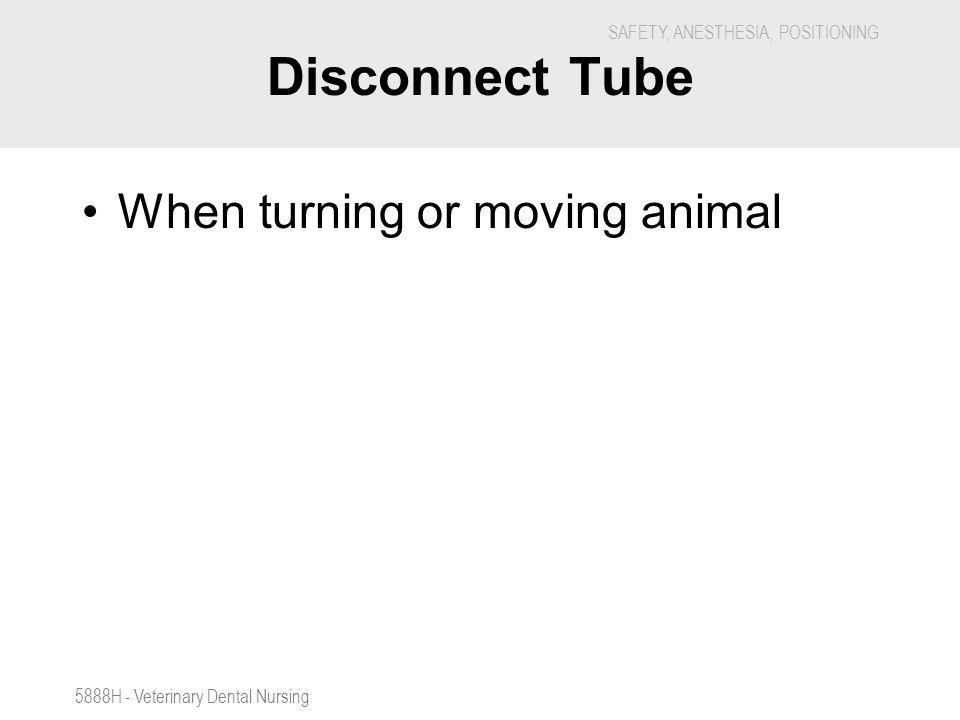 Disconnect Tube When turning or moving animal