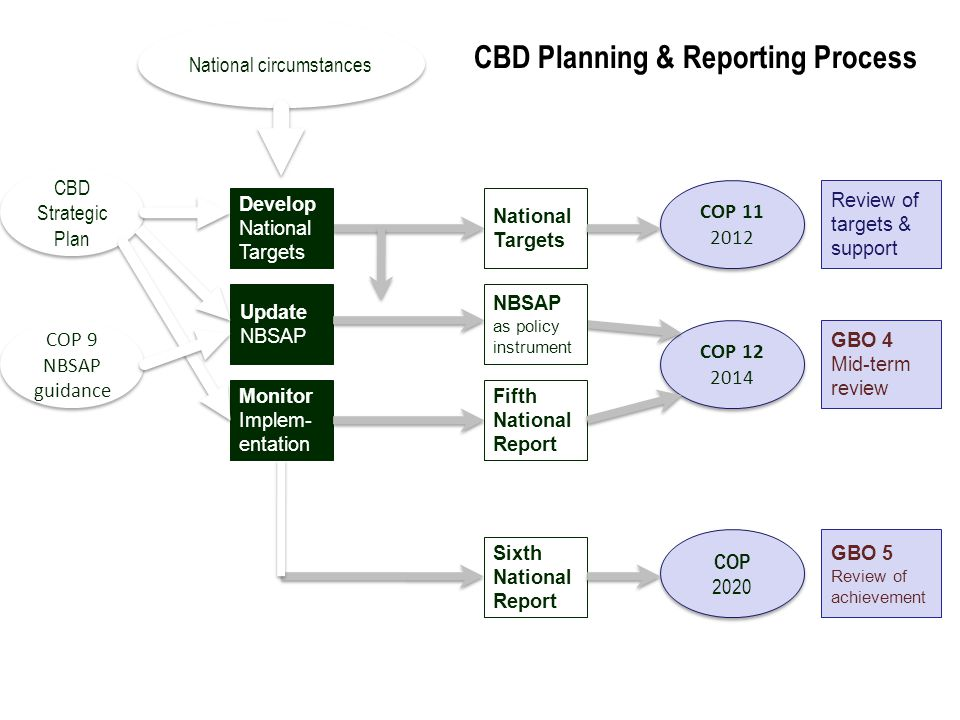 CBD Planning & Reporting Process