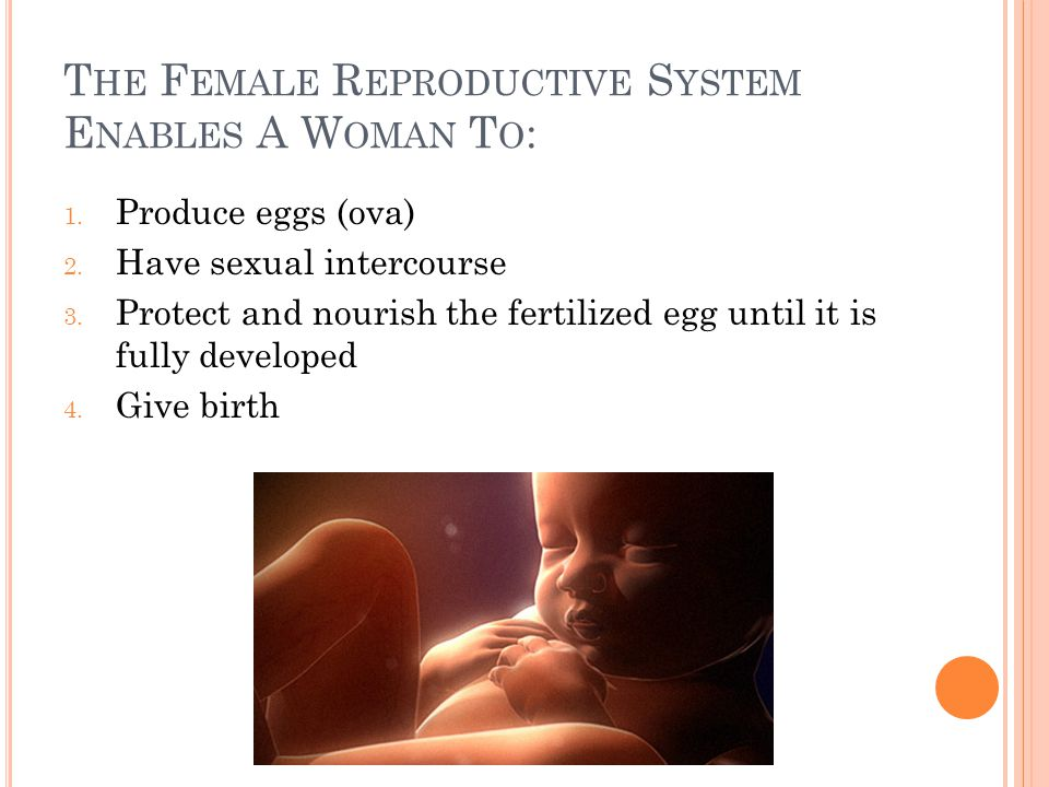 The Female Reproductive System Enables A Woman To: