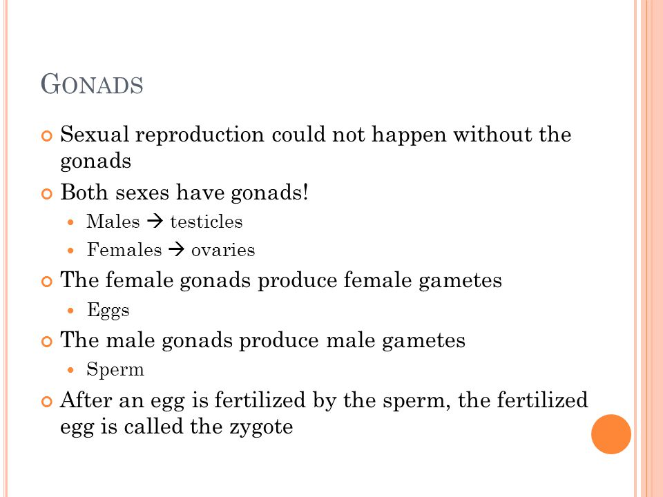 Gonads Sexual reproduction could not happen without the gonads