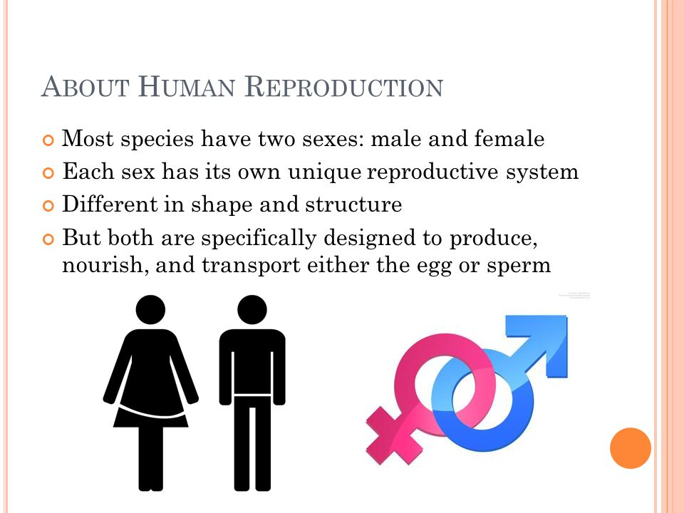 About Human Reproduction