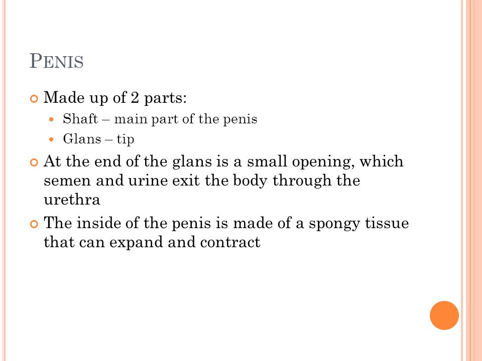 Penis Made up of 2 parts: Shaft – main part of the penis. Glans – tip.