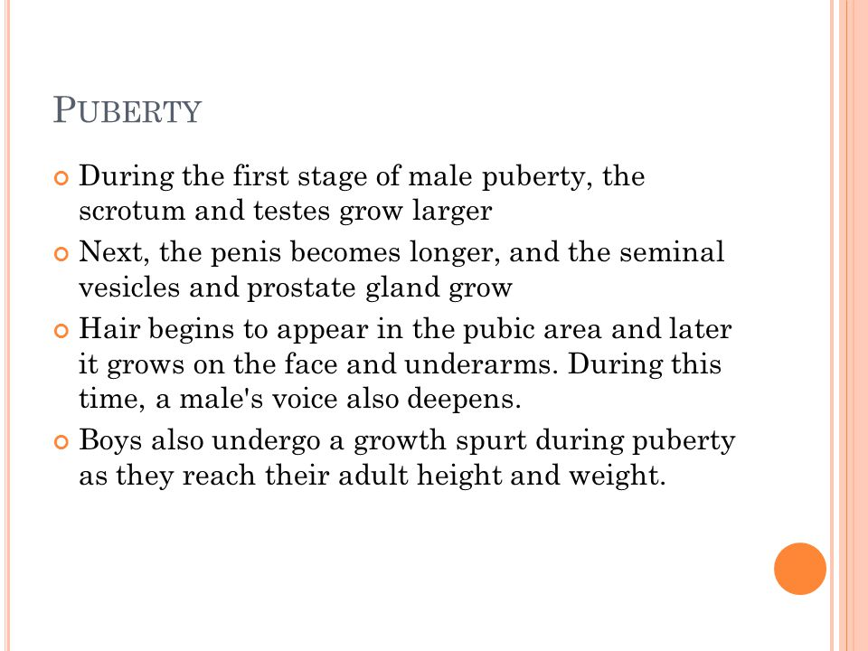 Puberty During the first stage of male puberty, the scrotum and testes grow larger.