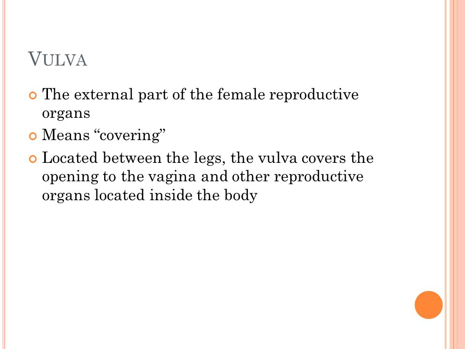 Vulva The external part of the female reproductive organs
