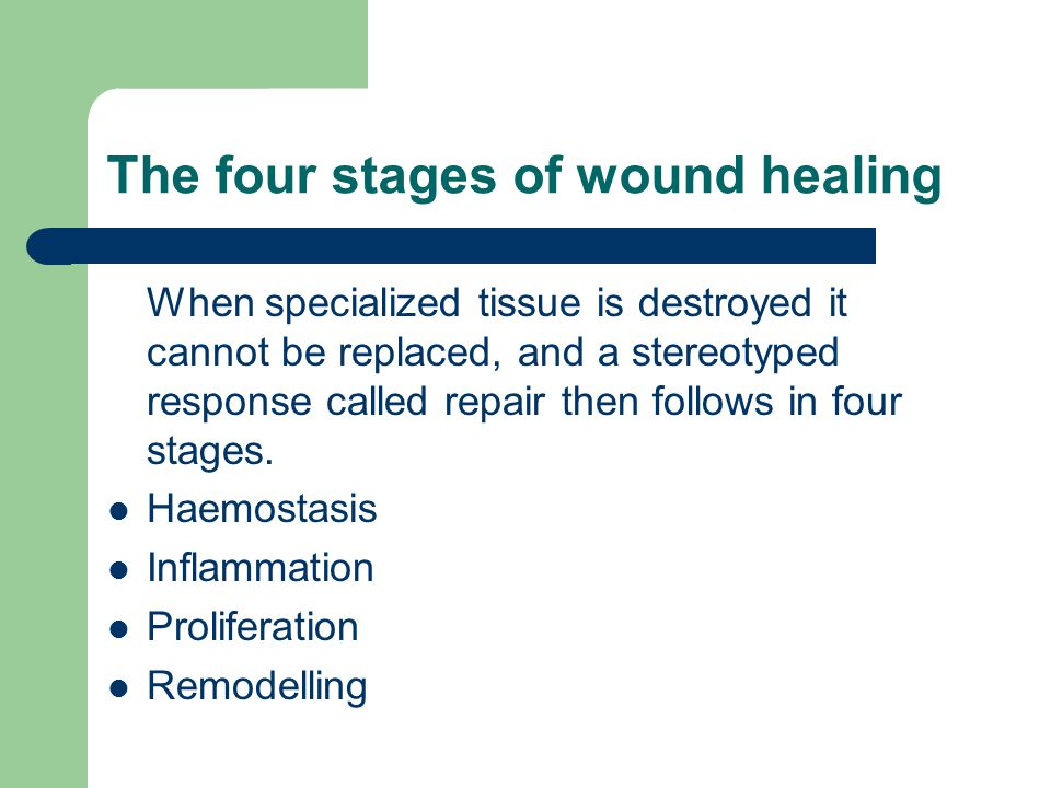 The four stages of wound healing