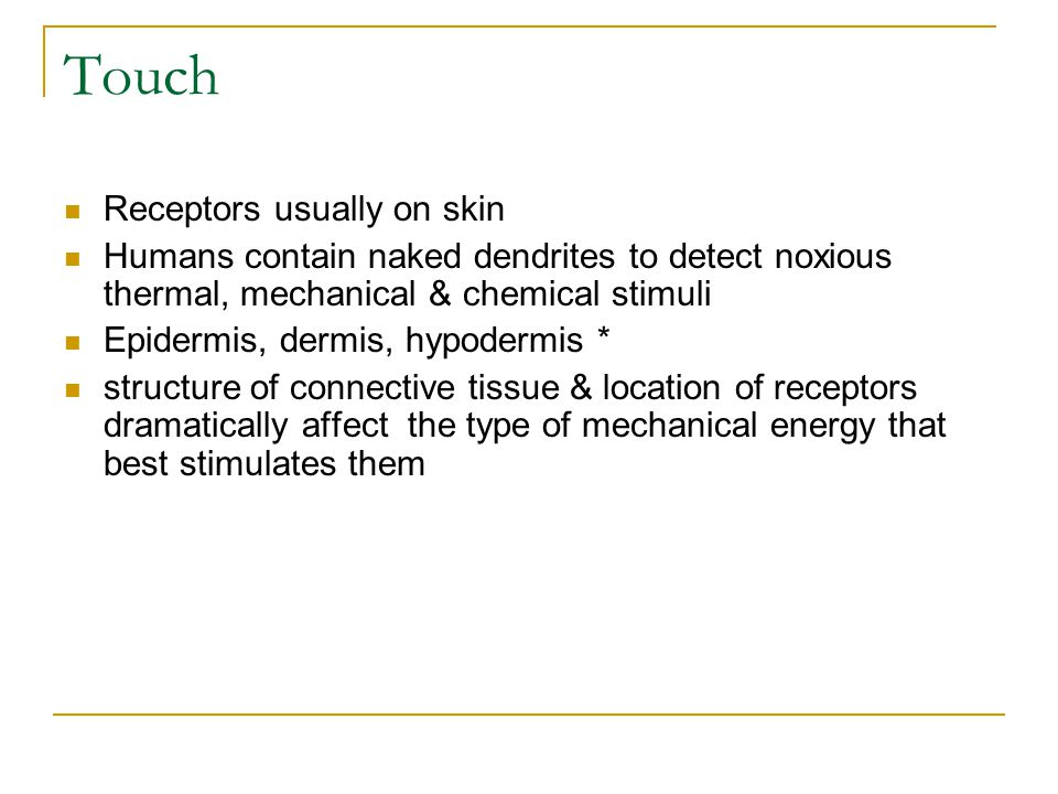 Touch Receptors usually on skin