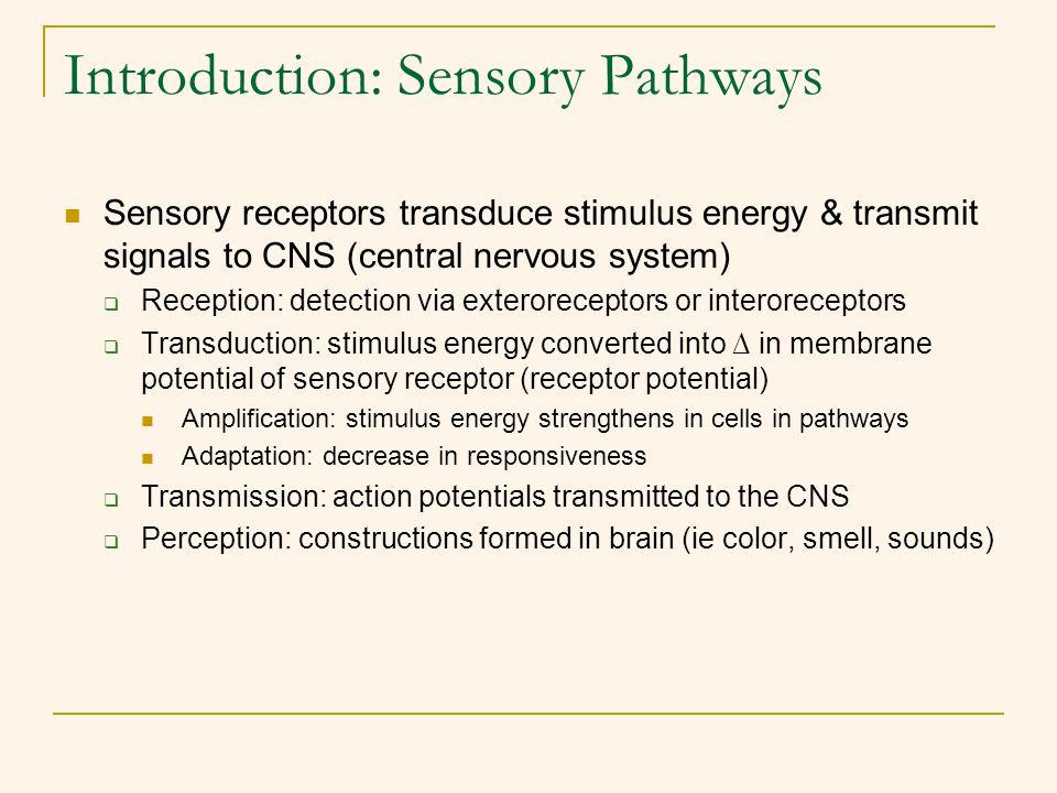 Introduction: Sensory Pathways