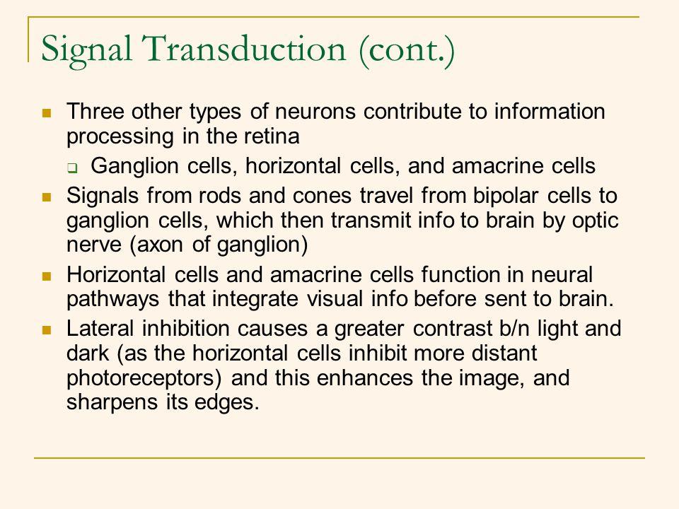 Signal Transduction (cont.)