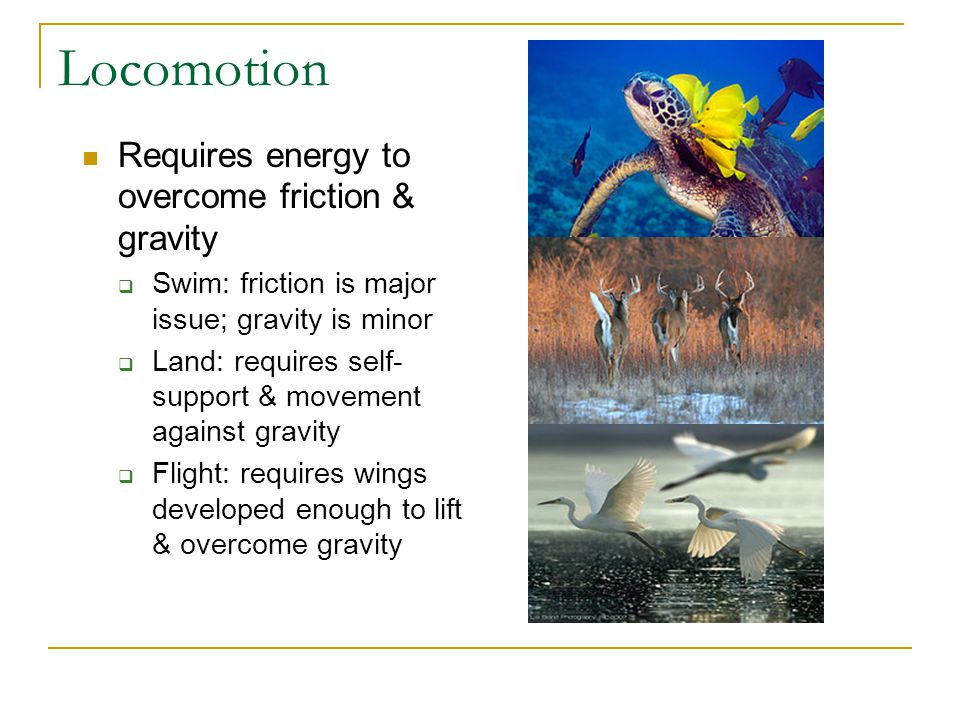 Locomotion Requires energy to overcome friction & gravity