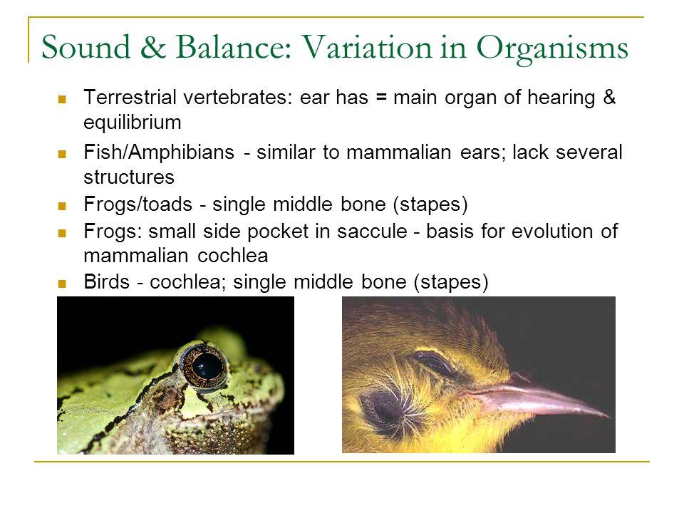 Sound & Balance: Variation in Organisms