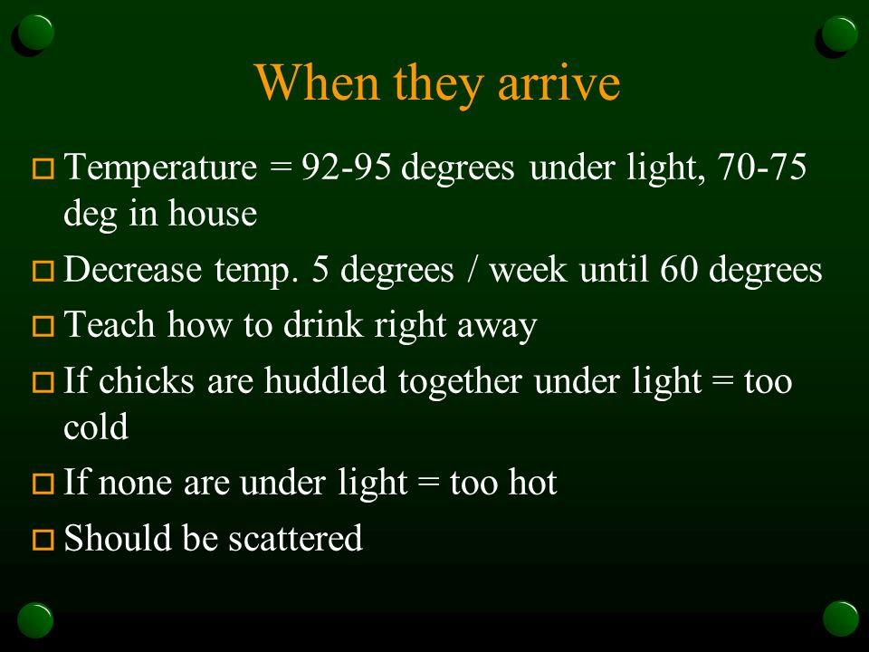 When they arrive Temperature = 92-95 degrees under light, 70-75 deg in house. Decrease temp. 5 degrees / week until 60 degrees.