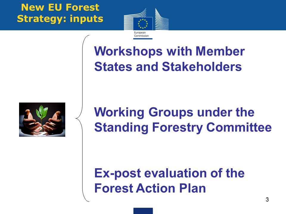 New EU Forest Strategy: inputs