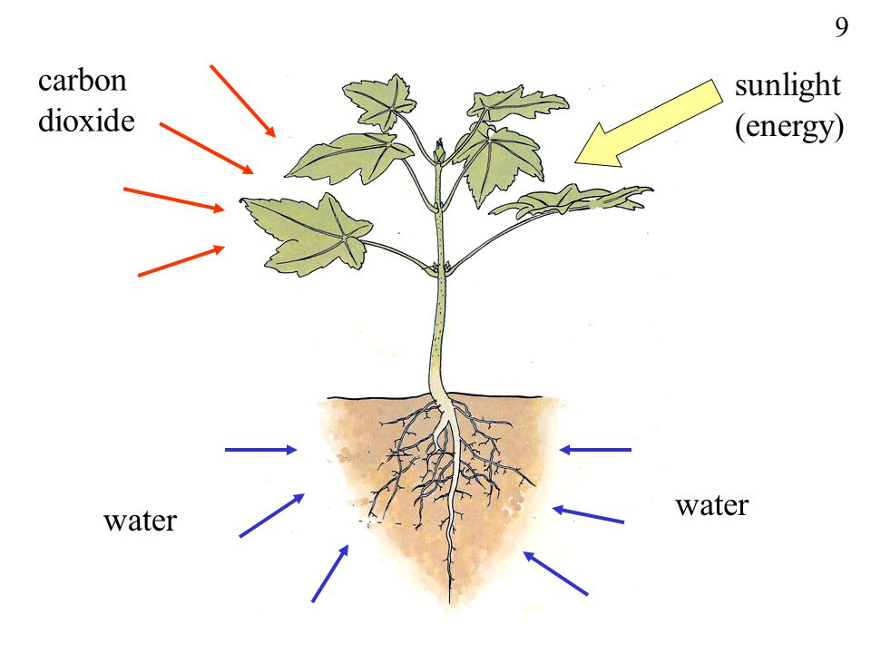 carbon sunlight dioxide (energy) water 9