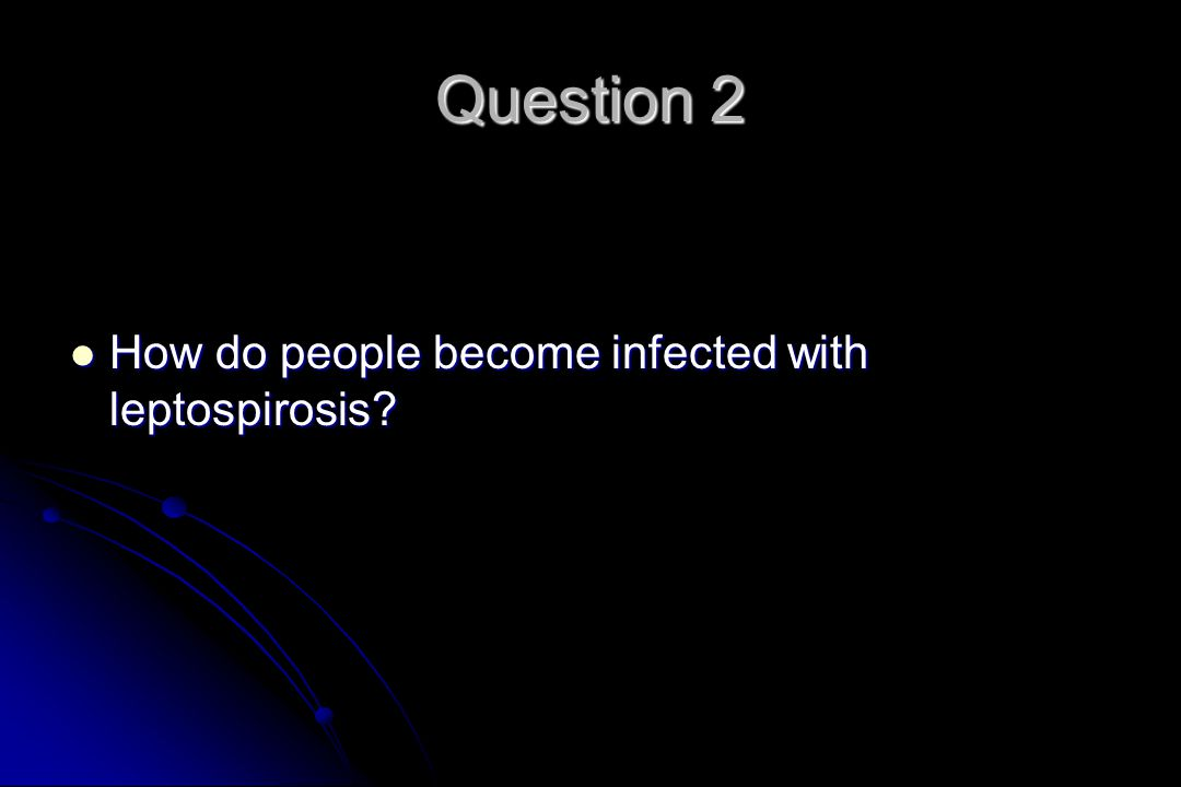 Question 2 How do people become infected with leptospirosis