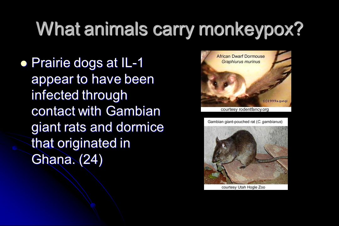 What animals carry monkeypox