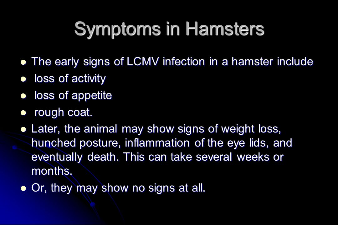 Symptoms in Hamsters The early signs of LCMV infection in a hamster include. loss of activity. loss of appetite.