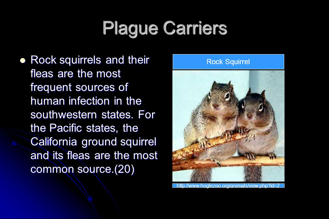 Plague Carriers