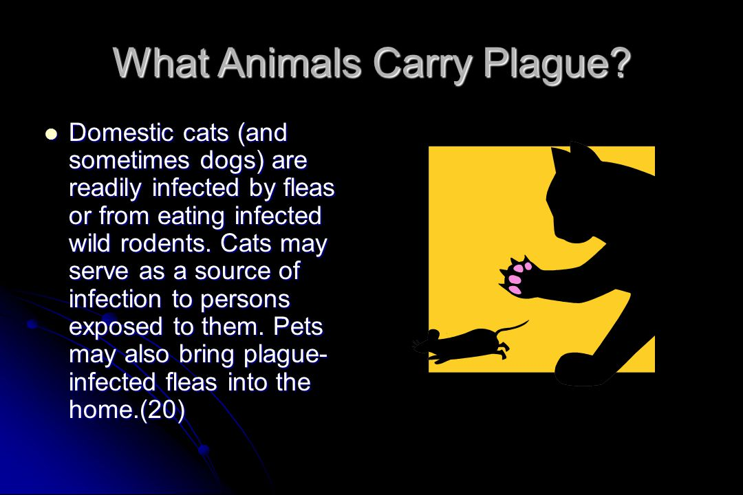 What Animals Carry Plague