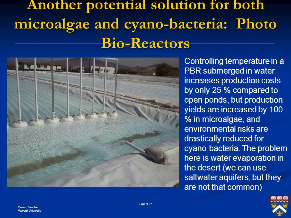 Another potential solution for both microalgae and cyano-bacteria: Photo Bio-Reactors