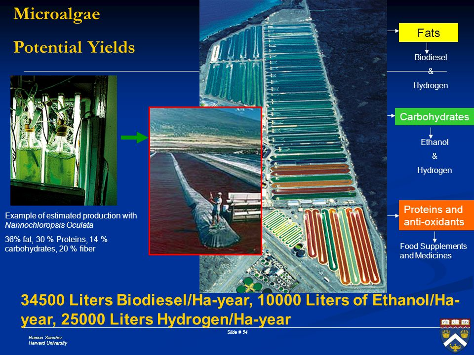 Microalgae Potential Yields