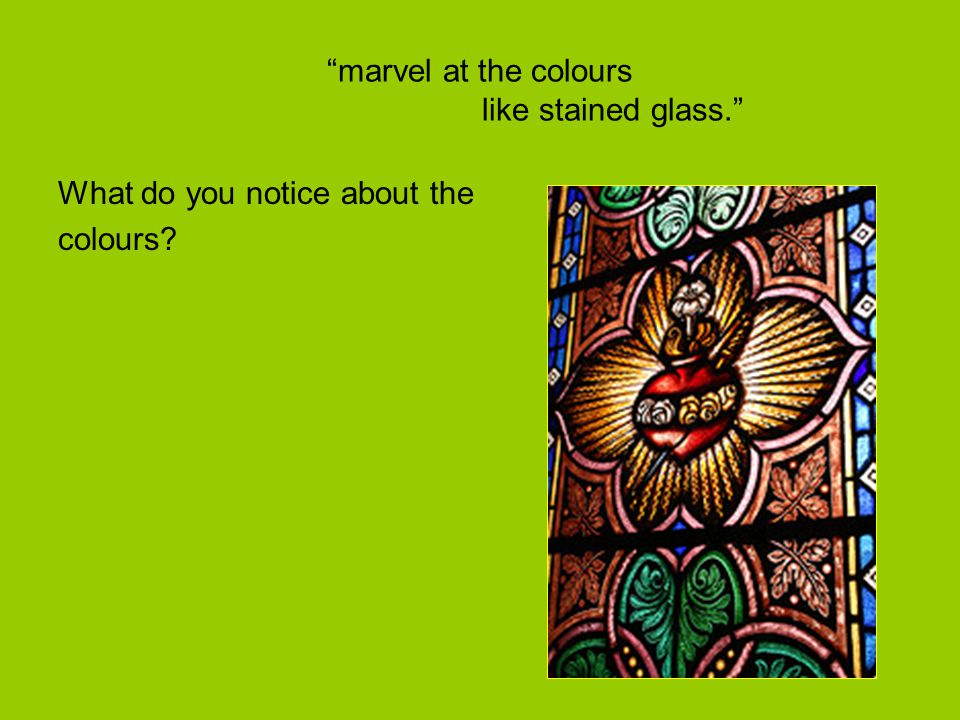 marvel at the colours like stained glass.