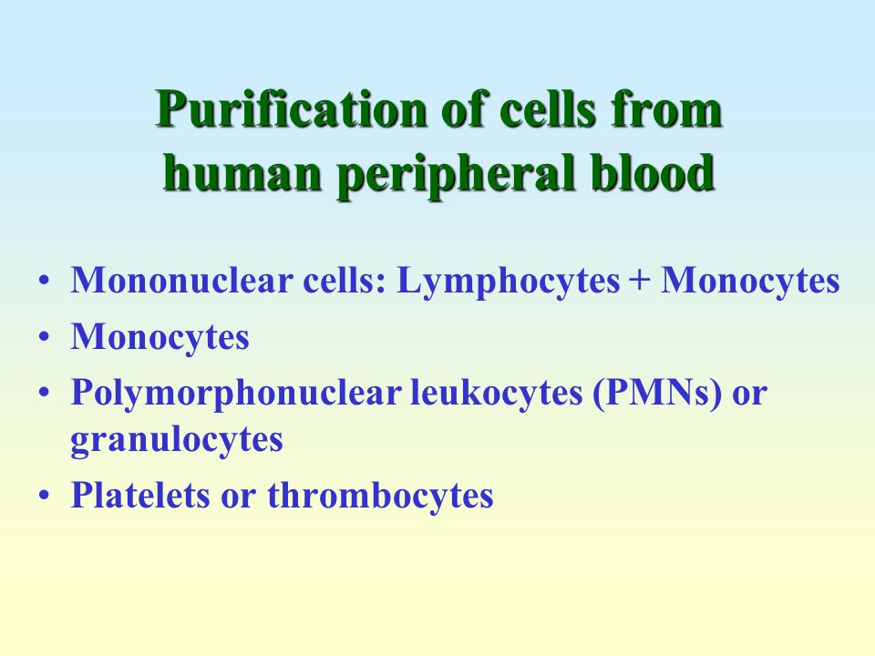Purification of cells from human peripheral blood