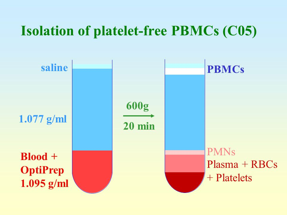Isolation of platelet-free PBMCs (C05)