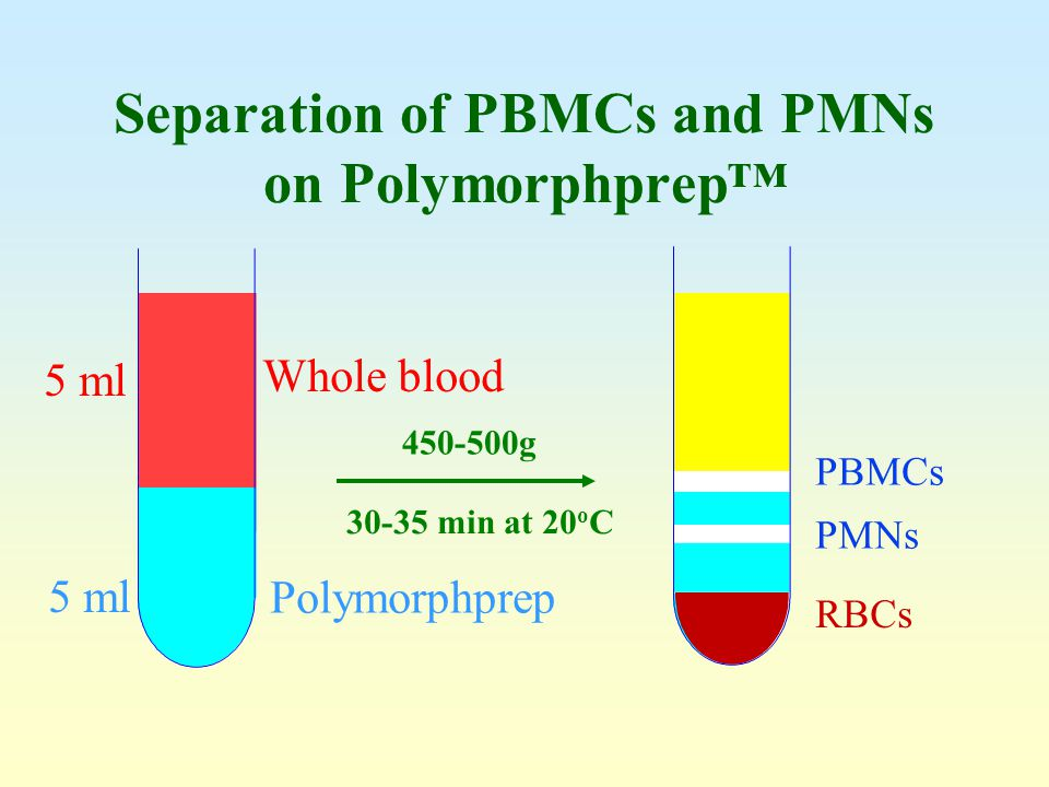 Separation of PBMCs and PMNs on Polymorphprep™