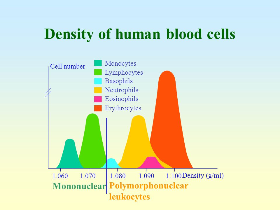 Density of human blood cells