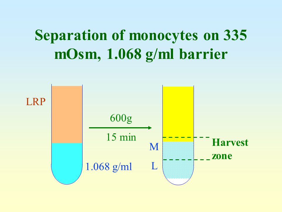 Separation of monocytes on 335 mOsm, 1.068 g/ml barrier