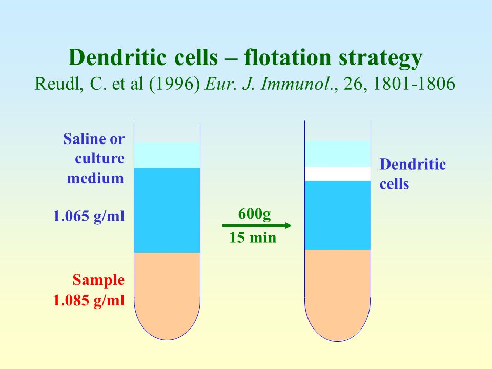 Dendritic cells – flotation strategy Reudl, C. et al (1996) Eur. J