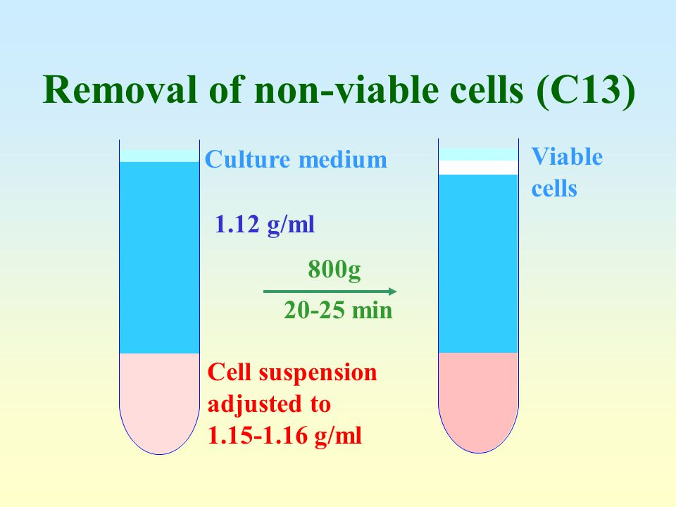 Removal of non-viable cells (C13)