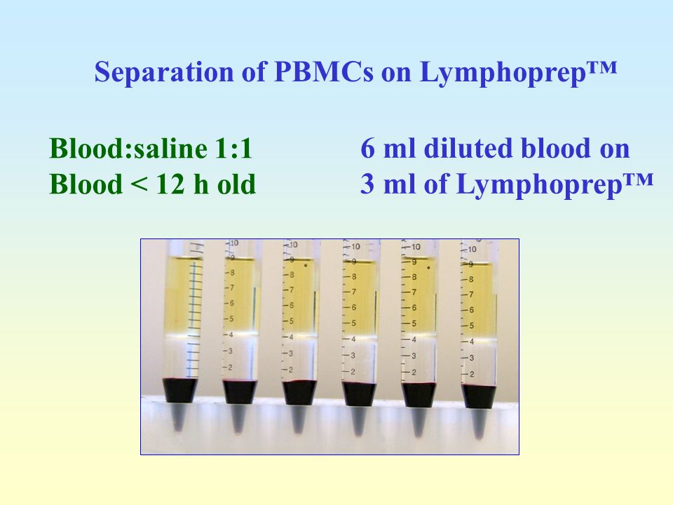 Separation of PBMCs on Lymphoprep™