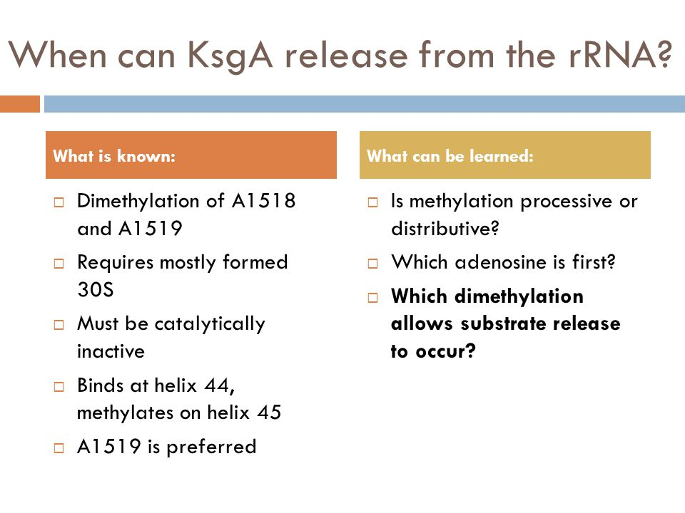 When can KsgA release from the rRNA