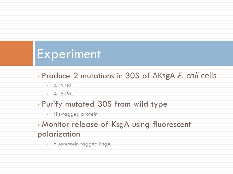 Experiment Produce 2 mutations in 30S of ΔKsgA E. coli cells
