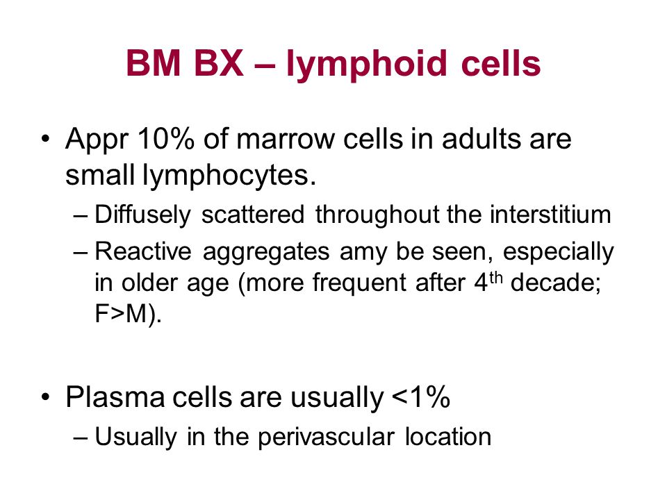 BM BX – lymphoid cells Appr 10% of marrow cells in adults are small lymphocytes. Diffusely scattered throughout the interstitium.